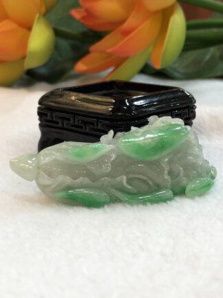 green jade cabbage